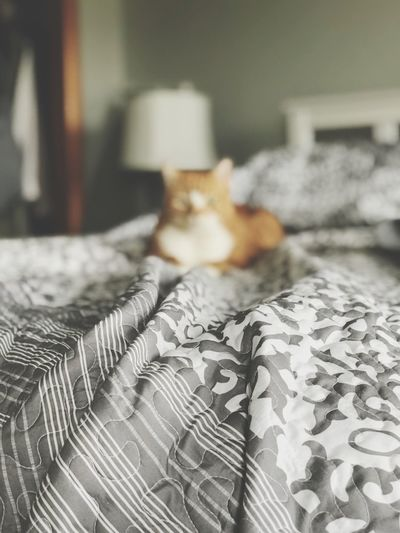 Cat on bed Family Cat Orange Cat Cats Of EyeEm Cat Lovers South Jersey New Jersey Photography New Jersey Photography Eyeemgallery EyeEm Best Edits EyeEm Gallery EyeENewHere EyeEm Best Shots - Nature Near And Far Bed Covers Selective Focus Out Of Focus Pet Photography  Pets Cats Cat Indoors  Textile Close-up No People Table Focus On Foreground Home Interior