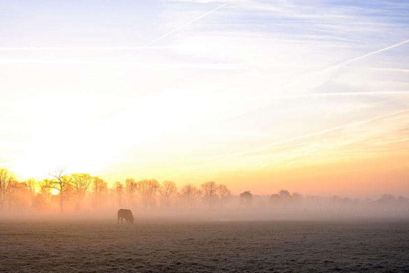 Countryside winter sunrise landscape Beauty In Nature Environment Fog Idyllic Land Landscape Lifestyles Morning Nature Non-urban Scene One Person Outdoors Scenics - Nature Silhouette Sky Sunset Tranquil Scene Tranquility