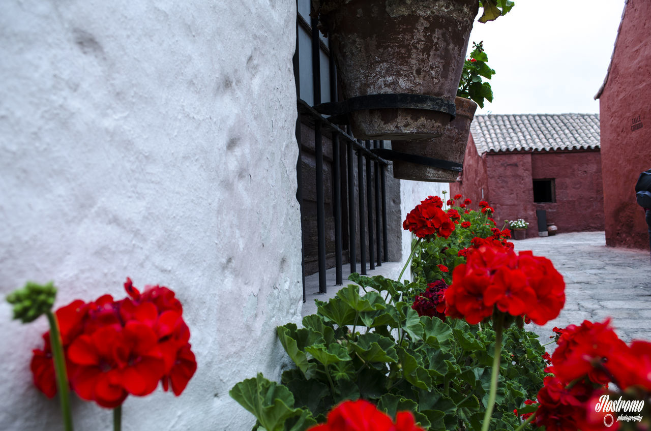 flower, architecture, building exterior, fragility, red, built structure, freshness, petal, outdoors, nature, flower head, growth, day, no people, plant, window, blooming, beauty in nature, window box, close-up, zinnia