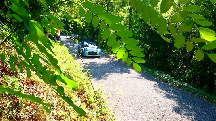 Day Green Color Tree Outdoors Nature Italy🇮🇹 Life Is Good Eyeem Photography Outdoor Photography Sony Xperia Z3 Fotography Foto Daylight My Smartphone Life EyeEm Gallery Nature Rally Car Citroen C3 R5 Asfalt Asfalto Rally Day