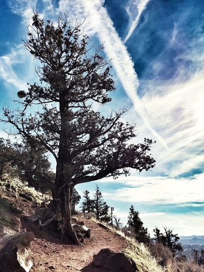 Cougar Tree Pilot Butte Trail Hiking Sky Cloud - Sky Nature Beauty In Nature Tranquility Outdoors No People