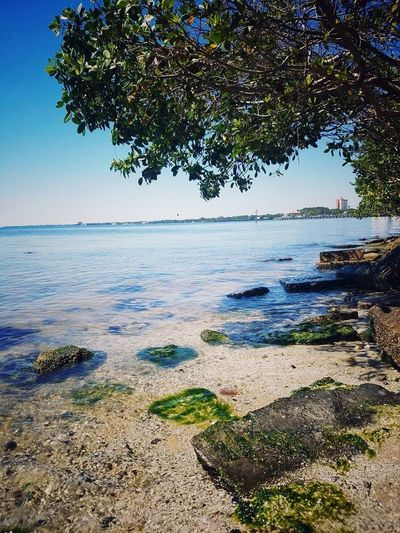 Riverbank Water Surface Water Horizon Over Water Tranquility Clear Sky Low Tide Looking To The Other Side Day Freshness No People Sea Nature Sky Scenics Outdoors Jetty EyeEmNewHere Beauty In Nature River Side Sunlight Growth The Great Outdoors - 2017 EyeEm Awards BYOPaper!