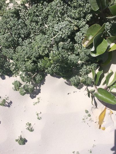 Tulum Beach Growth Nature Tree Beauty In Nature Tranquility Plant Day Outdoors Flower Fragility Close-up No People Freshness BeachBeauty In Nature Beach Mexico Tulum Holidays Nature Growth This Is Latin America