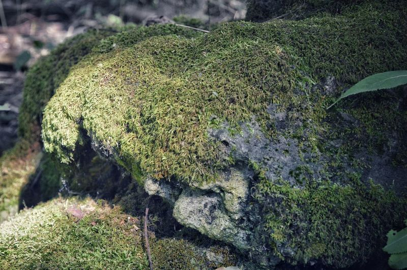 Moss. Nature Nature Photography Outdoors Field High Angle View Close-up Green Color Moss Growing Rough Ground Textured