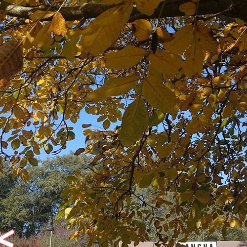 Autumn Yellow Leaves Cold colors trees october