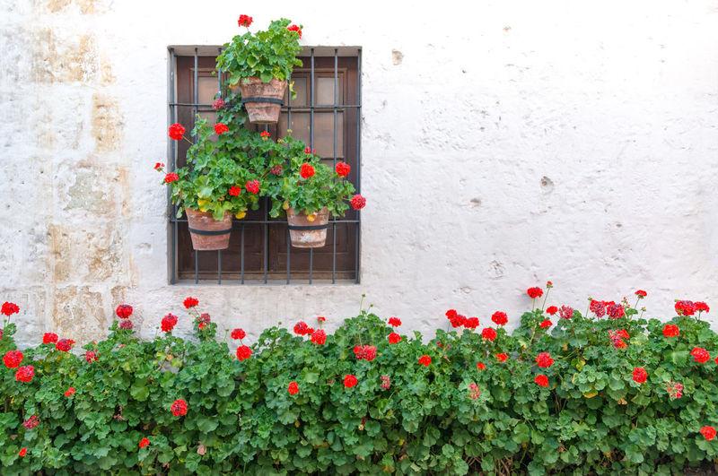 Plants growing by wall at santa catalina convent
