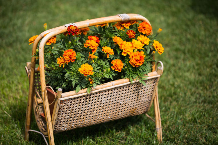 Close-up of fresh yellow flowers in basket