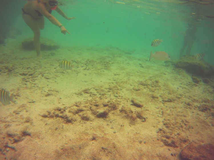 Firstfoto Mexico Akumal Urlaub Schnorcheln Fische Meer Strand Holiday Trip Traum Bahiaprincipe Nicehotel Baby First Eyeem Photo Live Love