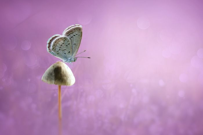 Insect Butterfly - Insect Pink Color Nature Animals In The Wild Animal Wildlife Animal Themes No People Close-up One Animal Plant Fragility Outdoors Day Pastel Colored Flower Beauty In Nature Perching Freshness