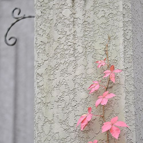 Close-up of maple leaf on wall