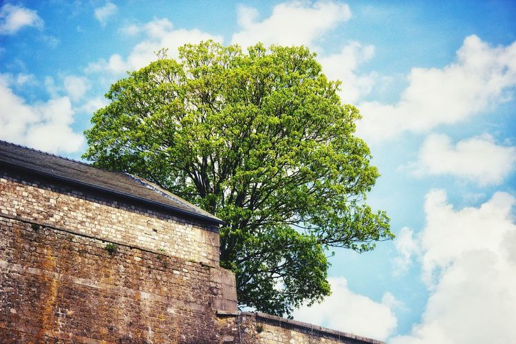 Bright Colors Sky Leafs Building Wall Clouds Green Blue Brick Wall Frog Perspective Eyem Best Shots EyeEm Gallery EyeEm Selects EyeEm Best Shots Tree Sky Cloud - Sky Growing Tall