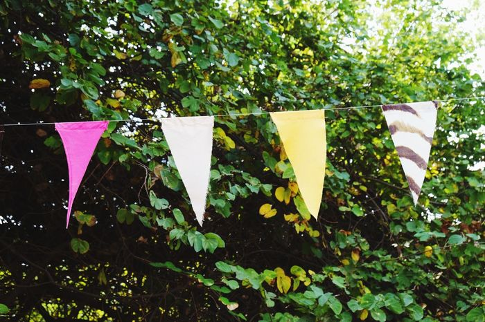 Bunting flags on tree Summer Springtime Spring Garden Party Time Enjoyment Carnival Holiday Fun Hanging Event Celebration Colorful Party Bunting Flags Bunting Flag Day Outdoors Green Color Patriotism No People Tree Nature
