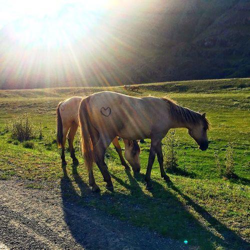 Солнечных коней вам в ленту 😉✌️ Кони горы мойпуть ГорныйАлтай Trevel Алтай Trip отпуск Beautiful Summer Color Palette Природа