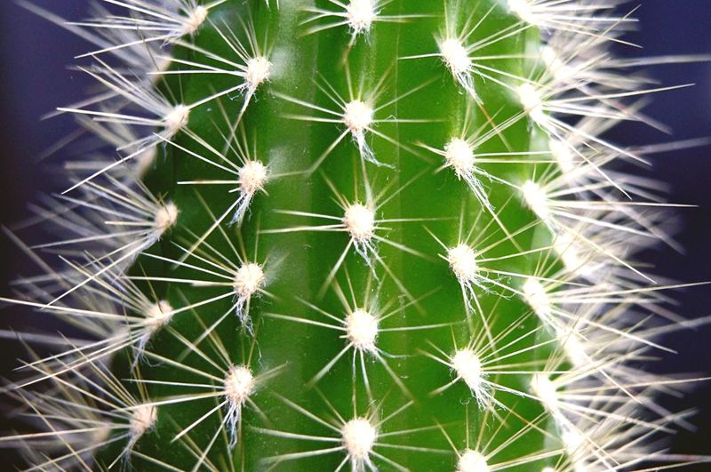 Close-up of a cactus Cactus Thorn Growth Nature Danger Spiked Plant RISK Close-up Green Color Beauty In Nature No People