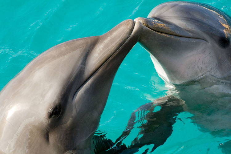 Close-up of dolphins swimming in pool