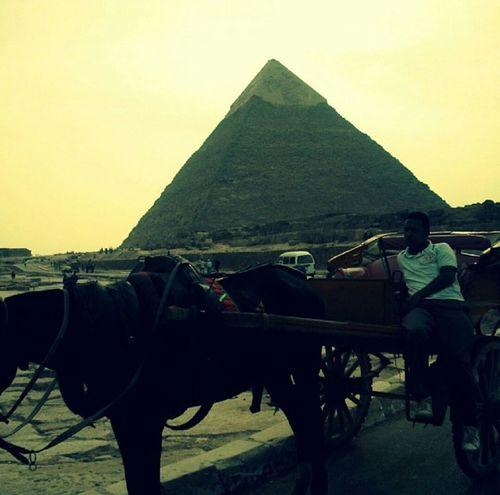 Cairo Egypt Cairo Pyramid Pryamids Giza Giza, Caïro, Egypt Giza Plateau Horse Horse And Cart likeforlike #likemyphoto #qlikemyphotos #like4like #likemypic #likeback #ilikeback #10likes #50likes #100likes 20likes likere