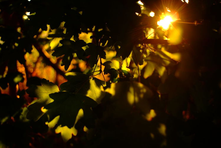 Close-up of leaves on tree at night