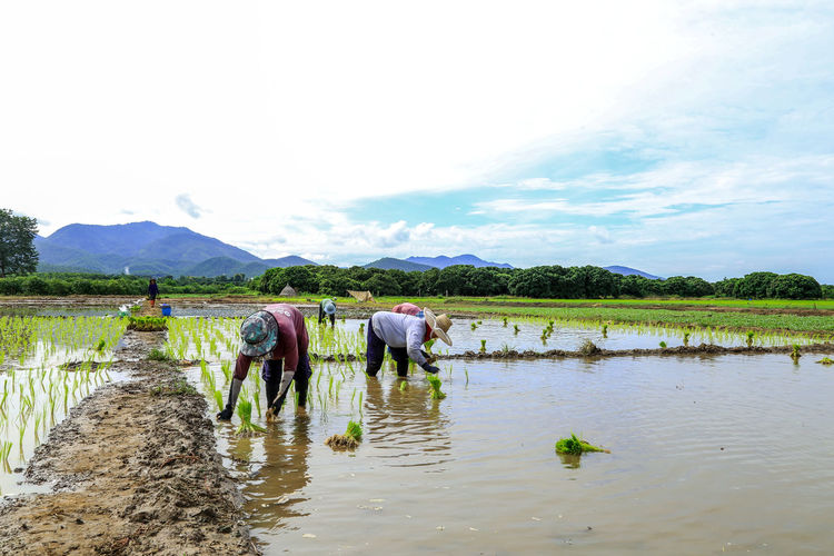 Men working in agricultural field against sky