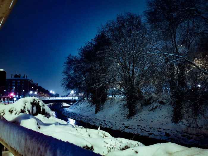 Bare trees in winter at night