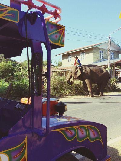 Road Roadtrip Elephant Thailand Elephant Animal Frame Car Transportation Sunlight