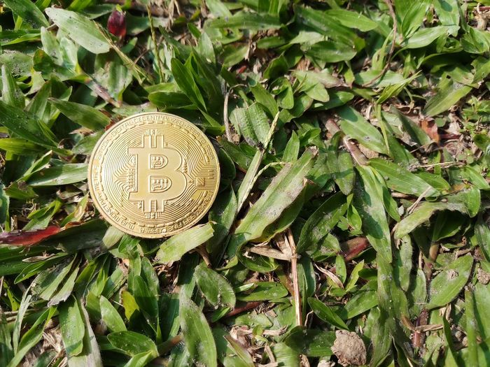 Golden bitcoin on grass background Bitcoin Coin Digital Currency Cryptocurrency Miner System Bitcoin Golden Golden Bitcoin Gold Bitcoin High Angle View Day Leaf Green Color Outdoors No People Growth Close-up Plant Nature