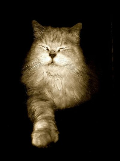 Cat My Cat King Cat Killer Cat Edit Photo