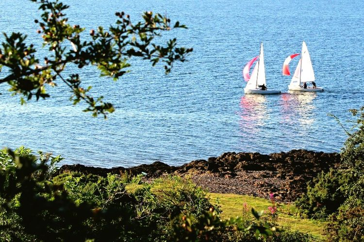 Yachting Yacht River River Tay Coast Reflection Race Boat