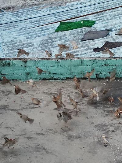 The Birds Birds