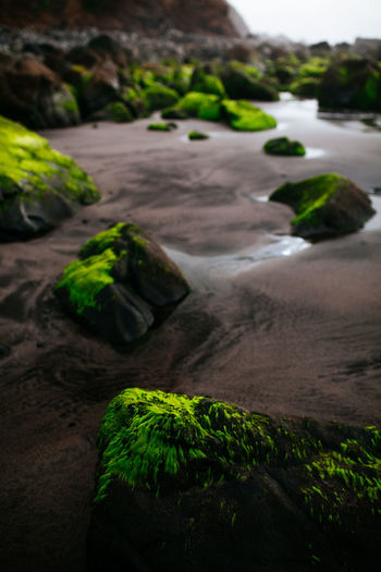 Benijo beach - Tenerife Foggy Weather Oceanside SPAIN Beauty In Nature Blacksandbeach Close-up Day Focus On Foreground Geology Green Color Land Moss Nature No People Outdoors Plant Rock Rock - Object Scenics - Nature Solid Tenerife Tranquil Scene Tranquility Water