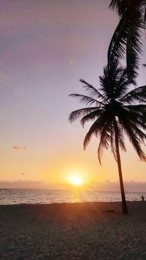 Beach Brisa Palmeras Cielo Azul Mar Sea EyeEmNewHere Tree Water Palm Tree Sea Wave Sunset Beach Beauty Sand Backgrounds The Great Outdoors - 2018 EyeEm Awards