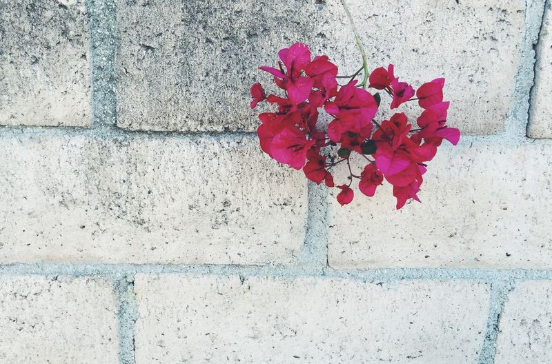 Close-up of red flowers blooming on wall
