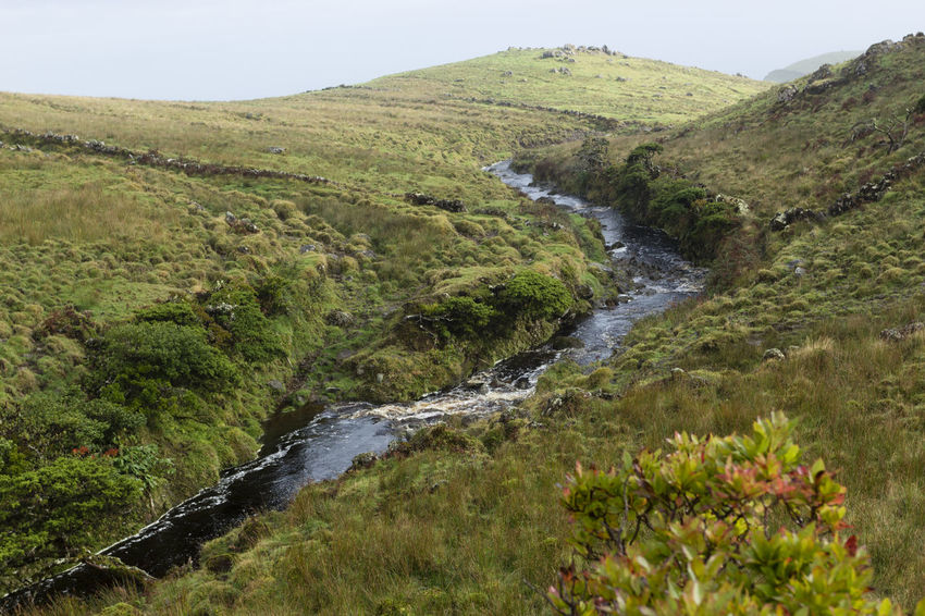 Azores EueEm Nature Lover EyeEmNewHere Portugal São Jorge Beauty In Nature Day Grass Green Color Growth Landscape Mountain Nature No People Outdoors River Scenics Sky Tranquil Scene Tranquility Tree Water Waterfall