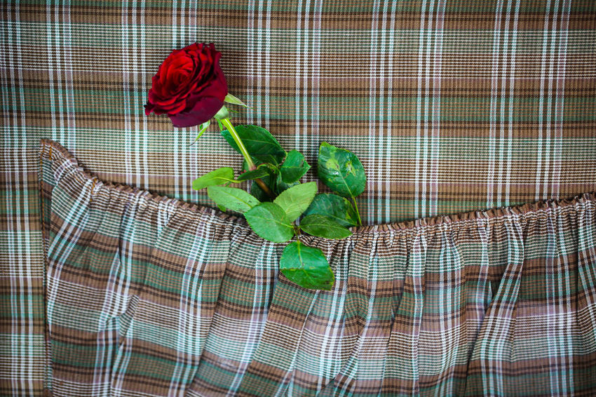 Rose In Old Suitcase, Red Rose, Travel, Lonely Rose Plant Green Color Red Rose - Flower Checked Pattern Rosé Flower Freshness Indoors  Textile Nature Flowering Plant Beauty In Nature Pattern Leaf Plant Part No People Art And Craft Vegetable Basket
