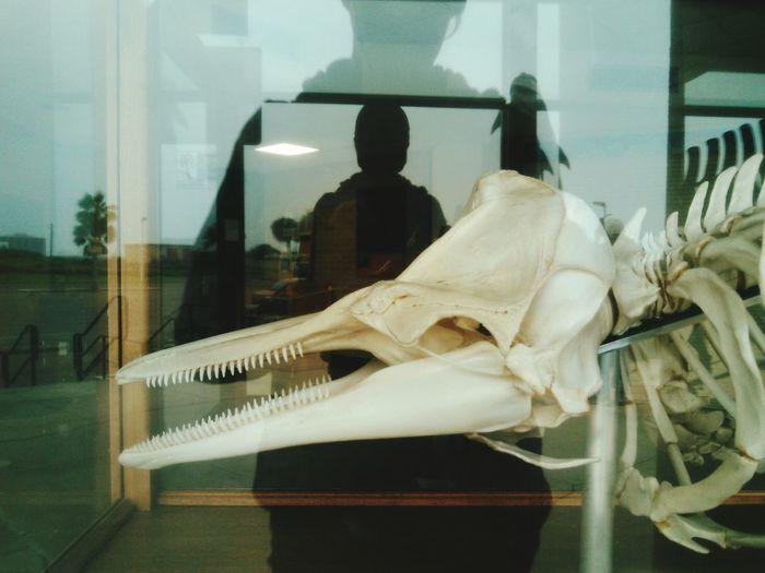 Glass Reflection Prestoric Dinosaur Bones Thats Me! Window View