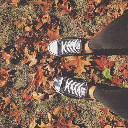 Fall Leaves Autumn Fall Colors