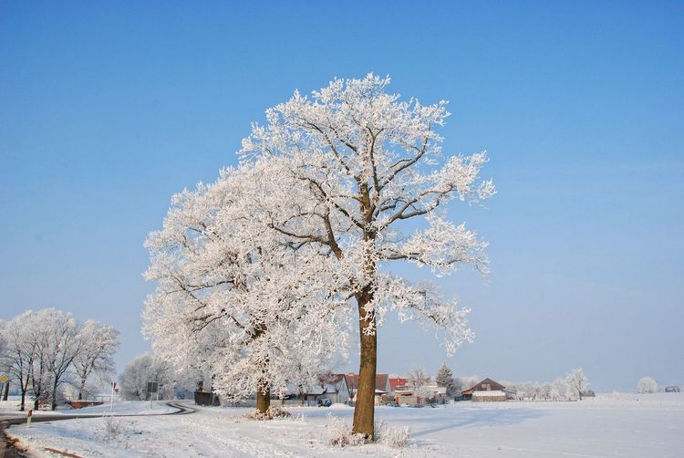 Beauty In Nature Clear Sky Cold Temperature Day Oderbruch Plant Snow Winter