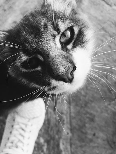 The Week On EyeEm Cat Cats Close-up Pet Black And White Friday