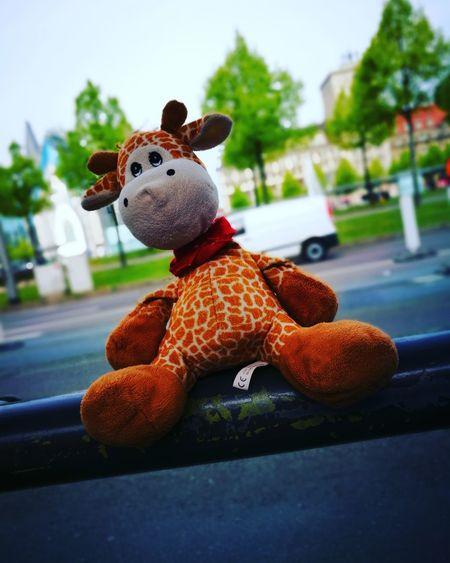 Toy Stuffed Toy Teddy Bear No People Outdoors Day Giraffe♥ GERMANY🇩🇪DEUTSCHERLAND@ Leipzig ❤ City