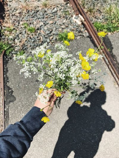 High angle view of person hand holding flowering plant