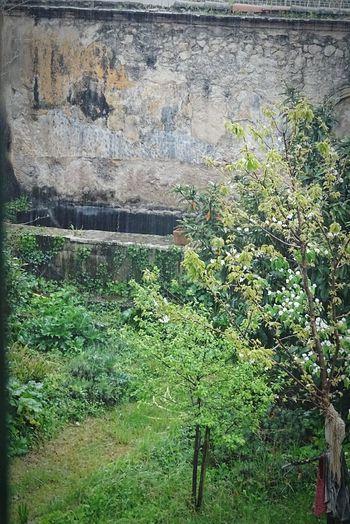 Palais Histoire Comte Plant Jardins Nature Tree Bassin