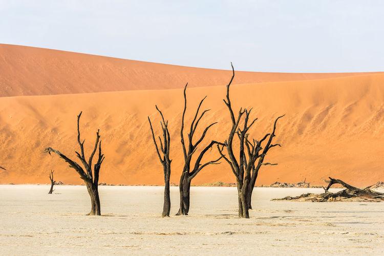 Bare tree on sand dune against sky