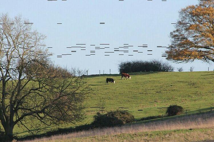 Countryside. Suffolk