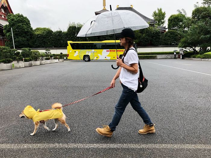 When in Tokyo be aware that the next Shiba wearing a fancy coat is probably just around the corner. Umbrella 😚 Walking The Dog Rain Coat Shiba Inu Real People One Person Casual Clothing Full Length Lifestyles Leisure Activity