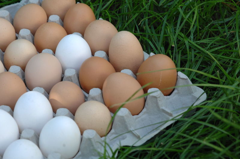 Close-up of eggs in carton on grassy field