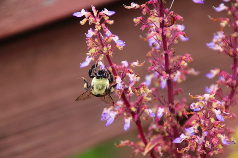 EyeEm Selects Beauty In Nature Outdoors Flowers Pollination Bumblebee Close-up No People