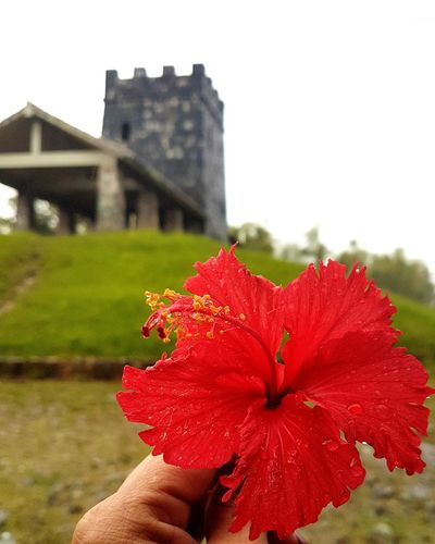 Architecture Flower Puerto Rico Caribbean_beautiful_landscapes Tranquility Built Structure