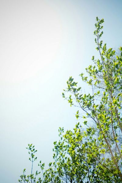 Sky Fuji Xpro1 Xf35mm Tree Spring Autumn Warmth Warmthandsunshine
