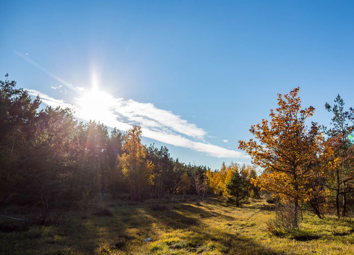 Tree Sky Plant Beauty In Nature Tranquility Tranquil Scene Scenics - Nature Sunlight Land Non-urban Scene Nature Landscape No People Environment Day Growth Sun Autumn Change Sunbeam Lens Flare Outdoors Bright