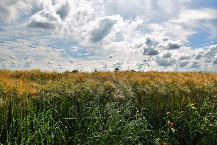 Padan plain landscape next to ferrara, italy