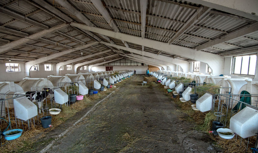 Interior Of Cow Shed